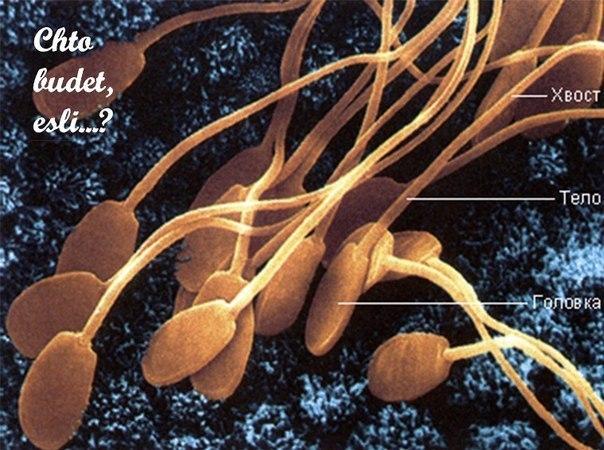 stroenie-spermatozoid-pod-mikroskopom