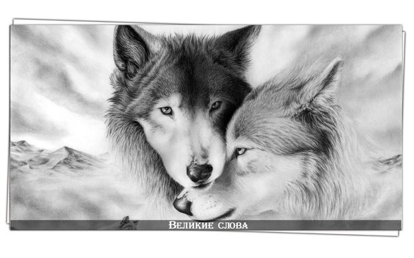 Волчий взгляд секс
